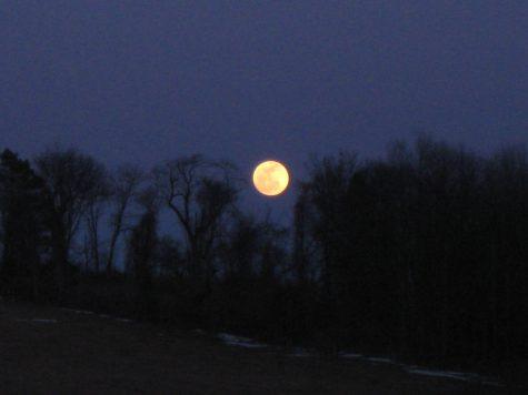 Photo courtesy of Turner Farms