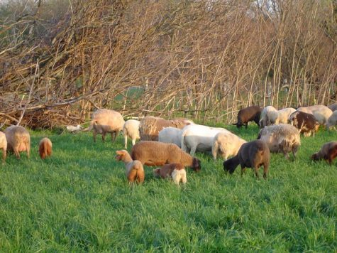 Photo courtesy of Pigasso Farms
